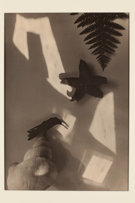 Jaromír Funke: Zátiší (s hvězdicí a kolibříkem), 1927-28, pozdější zvětšenina 200
