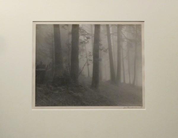 Jan Lauschmann: Les, 1922, černobílá fotografie