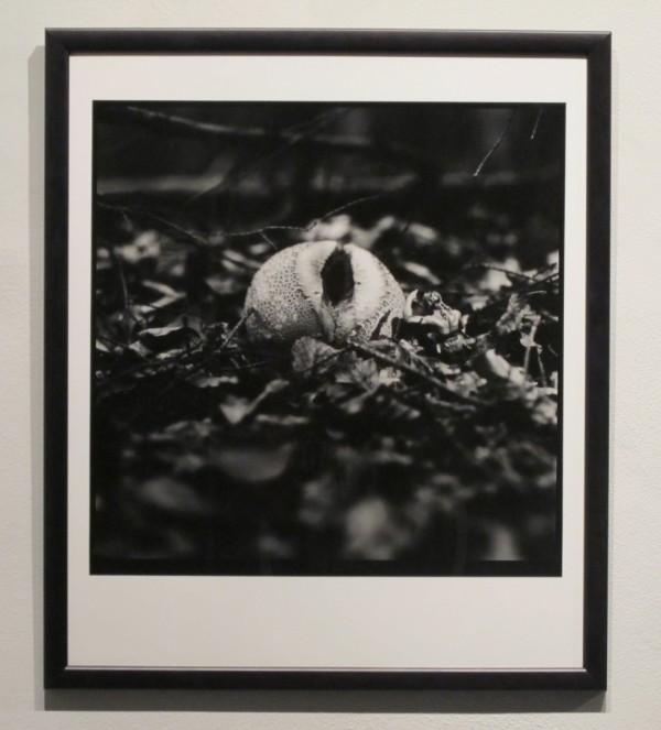 Rudolf Prekop: z cyklu: Aranže, černobílá bromostříbrná fotografie, 1992