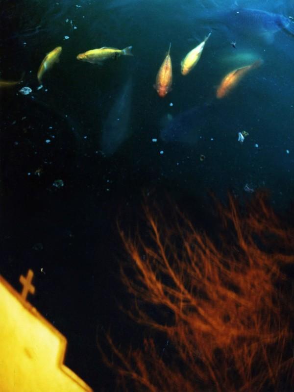 Nadia Rovderová - Souhvězdí ryb